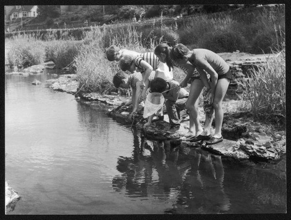A group of children fishing with nets in a country stream
