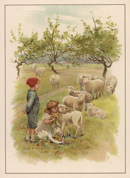 A girl and a boy with sheep and lambs