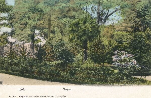 Chile - Lota -The Public Botanical Park / Gardens. Lota is a city and commune located in the centre of the Chile on the Gulf of Arauco. Date: circa 1910s
