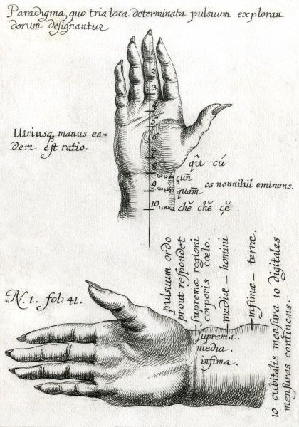 CHINESE THEORY OF PULSES The human hand, showing the points where the pulse of the blood flow can be accessed and used for healing purposes Date: circa 1680