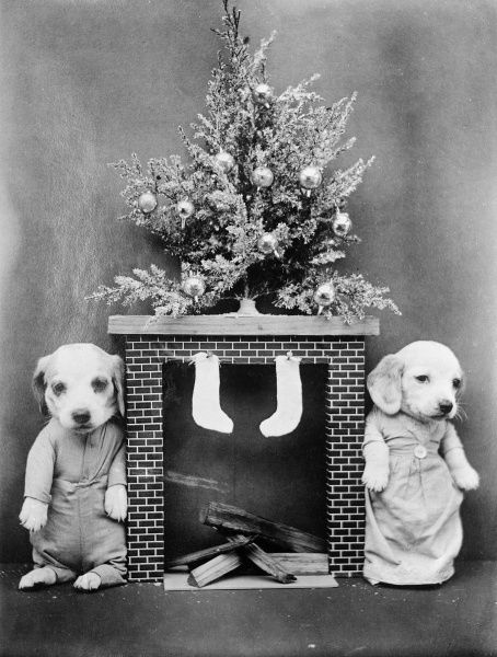 'A puppy is not just for Christmas'... two puppies standing either side of a mantlepiece, which has stockings hanging from it, waiting for Santa. Date: early 1930s