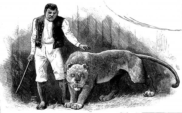 Engraving showing a 'Lion King' animal trainer, with a female lion, at the circus, c.1888