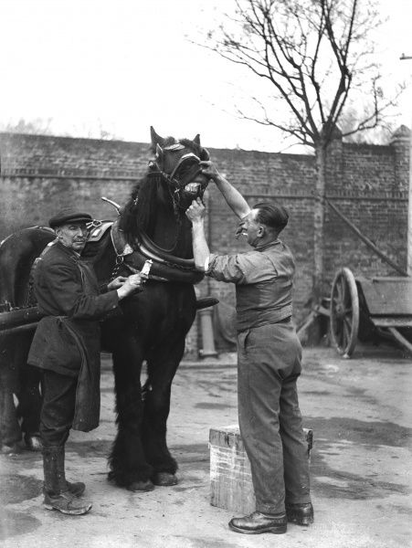 Cleaning a horse's teeth