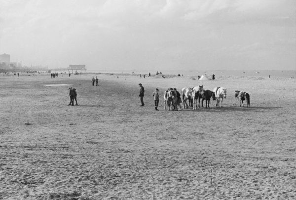 Donkeys on the beach at Cleethorpes, Lancashire