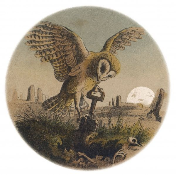 The Owl digs the grave in which the corpse of the late bird (as opposed to the early bird which catches the worm) will be laid