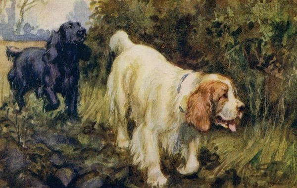 Cocker and Clumber spaniels. Artist: Eileen Hood. Watercolour of dogs out for a walk in the country Date: circa 1922