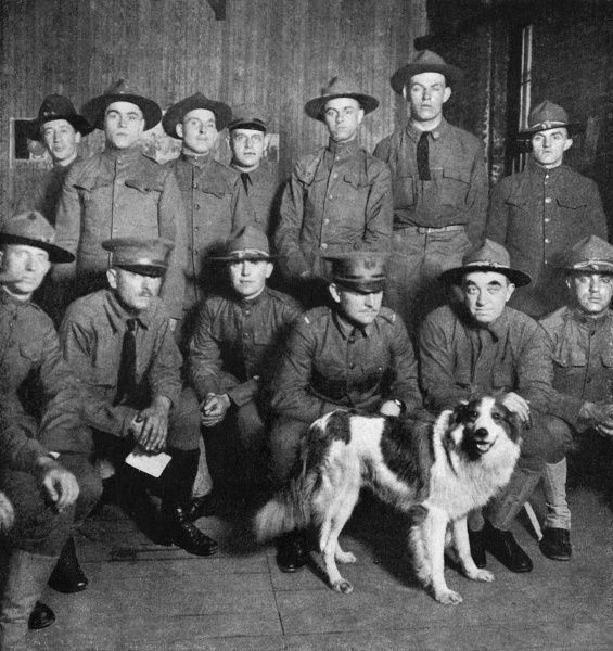 A collie of royal ancestry became the mascot of American soldiers