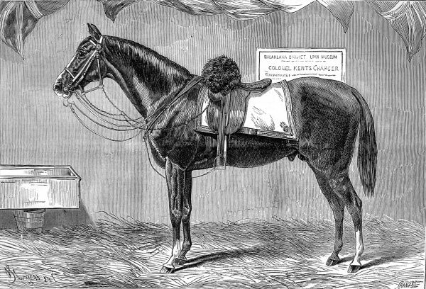Engraving of a horse, Colonel Kent's charger, which served in the Crimean War and was still alive 20 years later