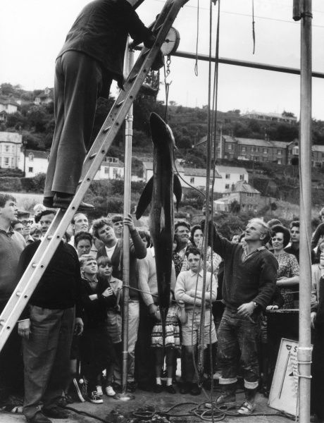 A fascinated family crowd watch as fishermen weigh the day's shark fishing catch at Looe, Cornwall, England. Date: early 1960s