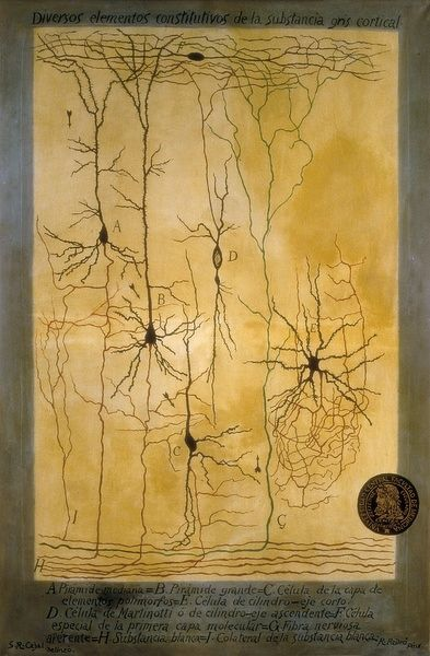 RAMON Y CAJAL, Santiago (1852-1934). Spanish doctor and histologist, Nobel Prize in 1906
