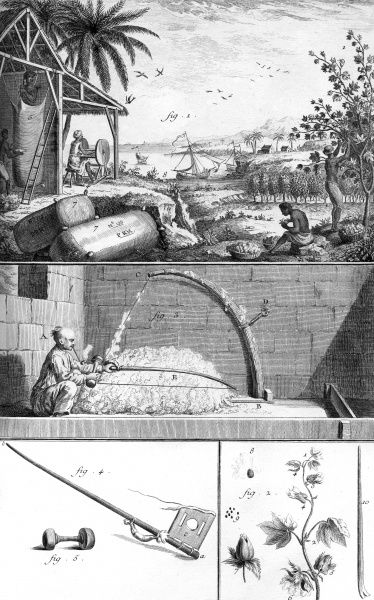 Various stages of cotton processing in the 18th century. Date: Circa 1760