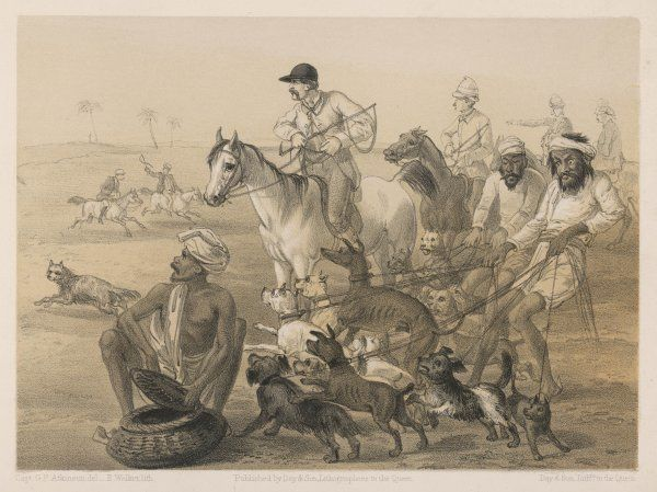 Sporty Englishmen are accompanied by a motley pack of 'hounds' as they seek to recapture the glory of the chase on an Indian plain
