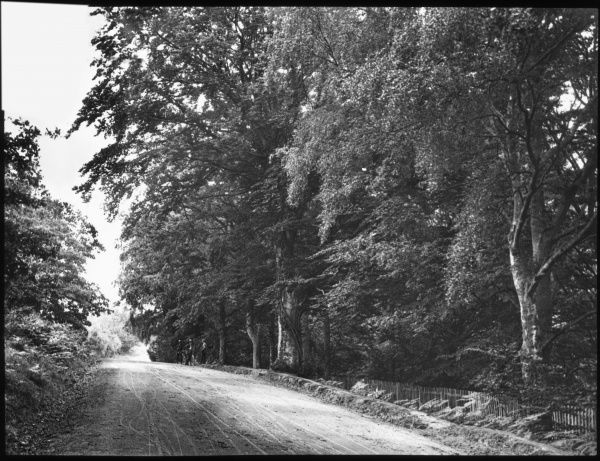 An unidentified country road lined with trees