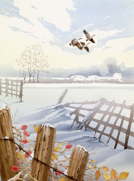 A flock of Canada Geese (Branta canadensis), flying over a snow-covered countryside of old fences, hazy white skies and a tangle of thorns and rosehips. Watercolour painting by Malcolm Greensmith