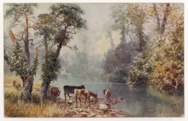SIDMOUTH: THE RIVER SID. Cows stand in the shade of ivy covered trees at the river's edge to have a drink in this idyllic rural scene