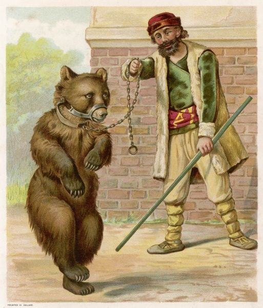 The dancing bear in chains dances for its owner