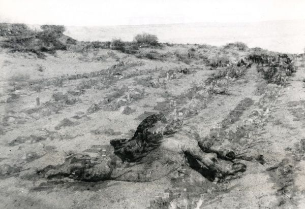 A dead camel in an advanced state of decomposition, photographed during a march through the desert to Palestine during the First World War. Date: 1917