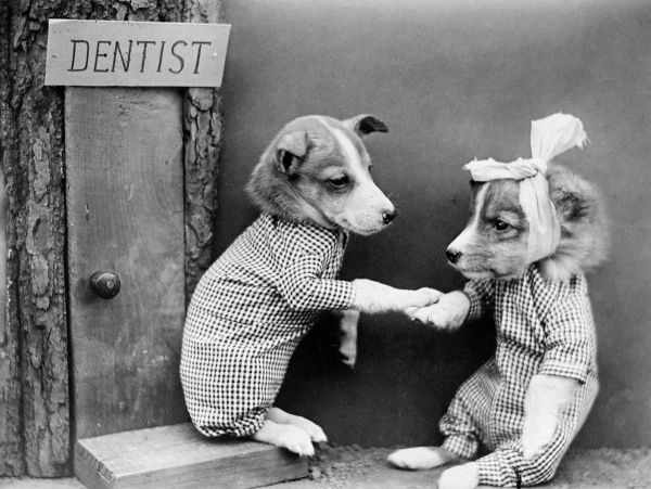 A doggy dentist treats a client with toothache! Date: early 1930s