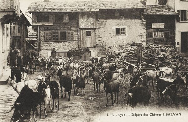 The Departure of a herd of goats from the village of Salvan, Switzerland