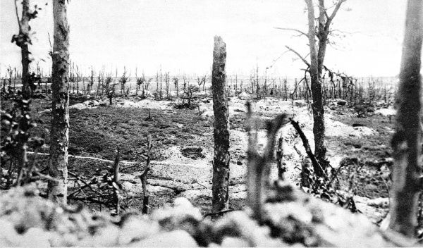 A view of Thiepval wood, the scene of heavy artillery bombardment by the British army during the First World War