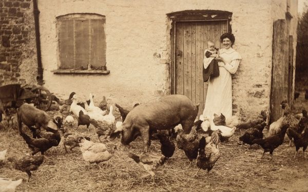 A young farmer's wife holds her baby, in a Devonshire farmyard full of animals