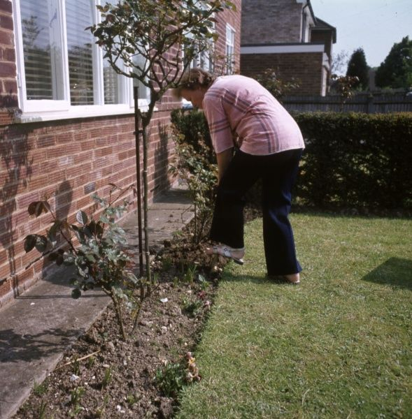 A suburban housewife digging the garden. Date: 1975