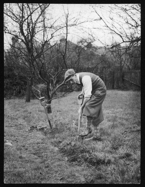Digging for Victory in England during World War Two - or in this case, Forking for Victory. Self-sufficiency and growing your own vegetables was encouraged