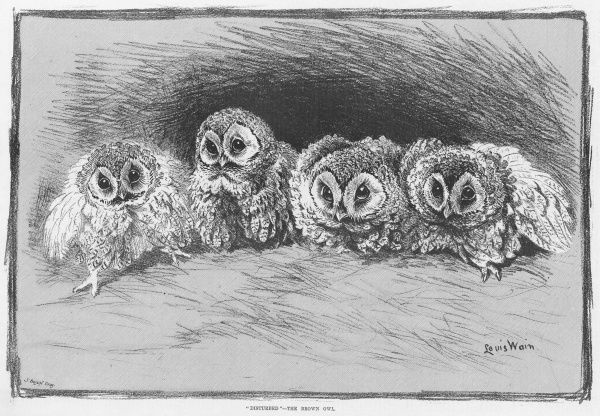 Study of brown owls by Louis Wain