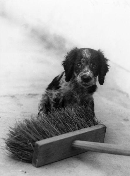 A dog gets the brush off! Date: 1930s