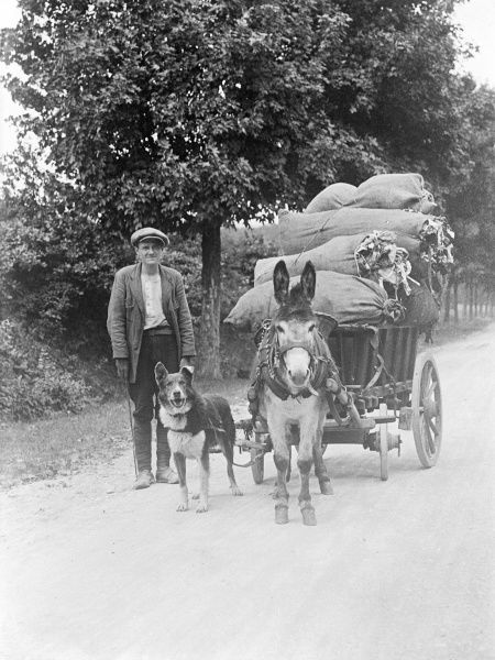 This dog and donkey pulling a cart make a great team! Date: early 1930s