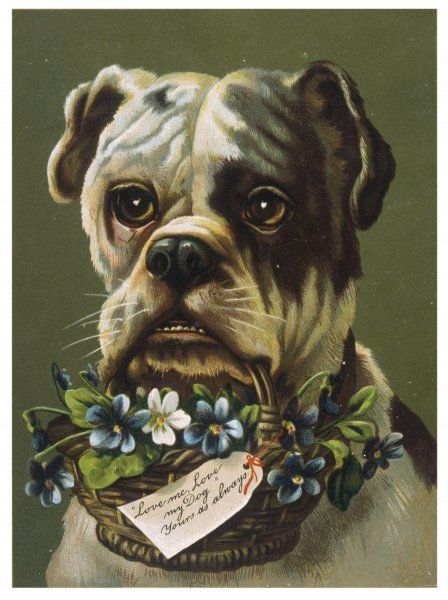A Bull Dog holds a basket of flowers in his mouth on the front of this New Year card