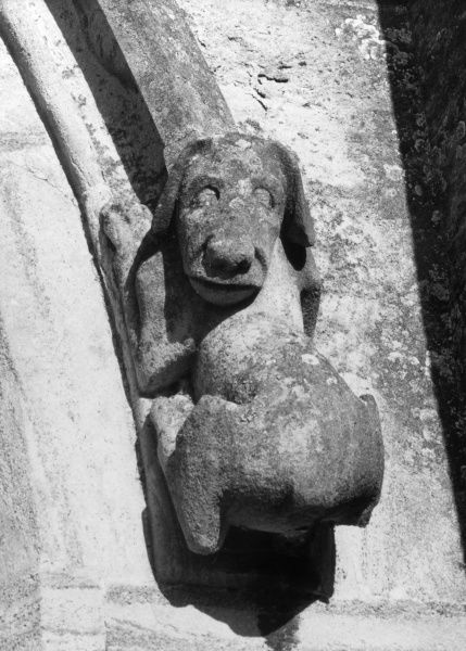 A gargoyle of dog on Steeple Ashton church, Wiltshire, England. Date: Medieval