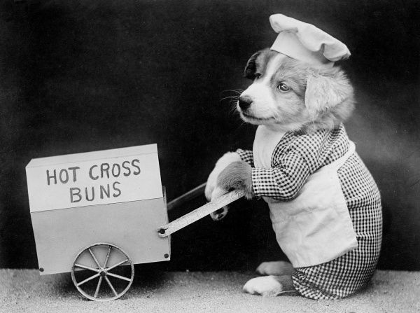 A dog selling hot cross buns in a barrow. Date: early 1930s