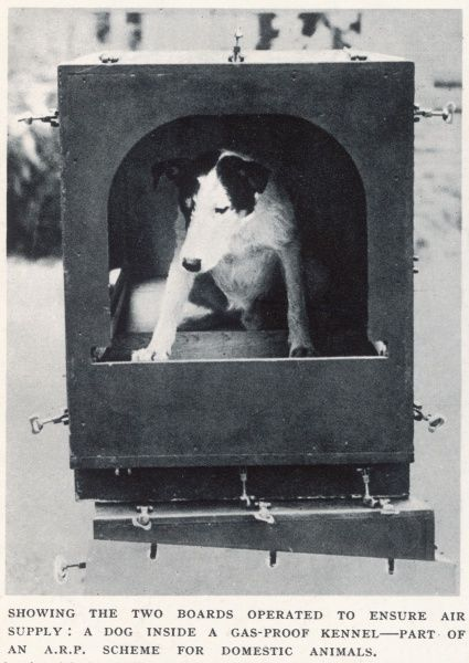 A dog inside a gas-proof kennel, part of an A.R.P. scheme for domestic animals at the outbreak of World War Two