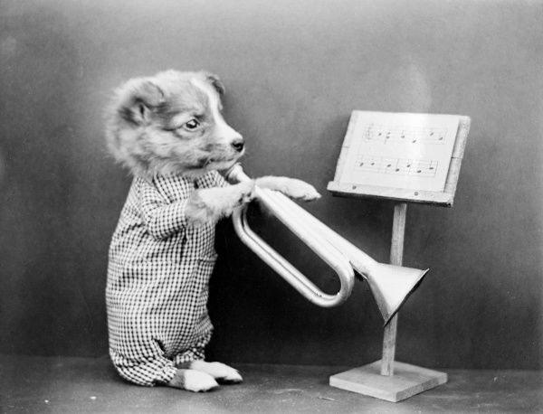 A dog playing a trumpet, reading sheet music from a stand! Date: early 1930s