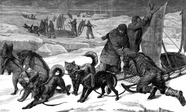 Engraving showing dog sledges for use in Arctic conditions, circa 1875. As can be seen in the picture, many Arctic explorers favoured the use of sledges drawn by dogs, with sails used as well when possible