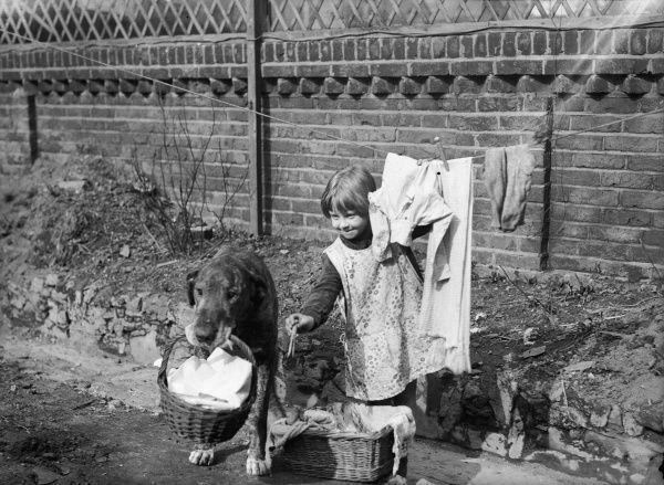 A helpful dog holds a basket of laundry in its mouth for a little girl, who is pegging out her washing