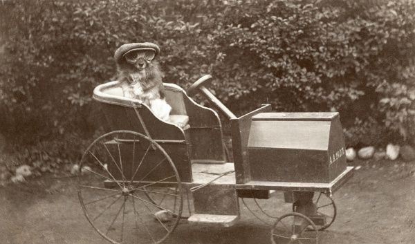 Next stop Barking! A doggy driver complete with cap and goggles sits in the luxurious surrounds of a particularly fine model toy car