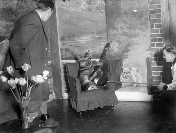 Two amazed men watching a talented German Shepherd dog playing a guitar on a chair in one of the corners of the Dogs Club Cocktail Bar! Date: early 1930s
