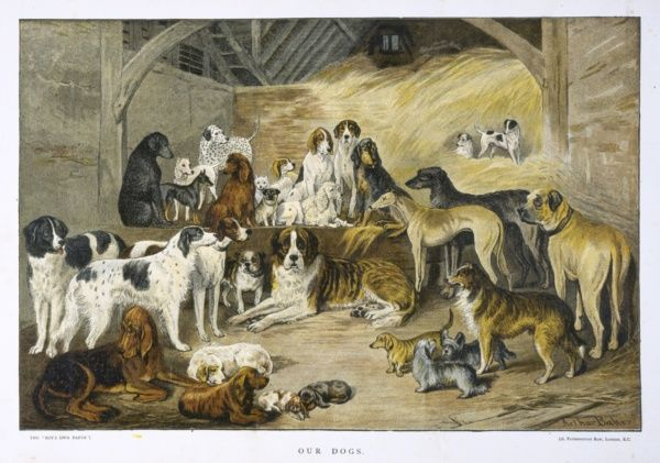 An illustration showing various breeds of dogs gathered in a barn