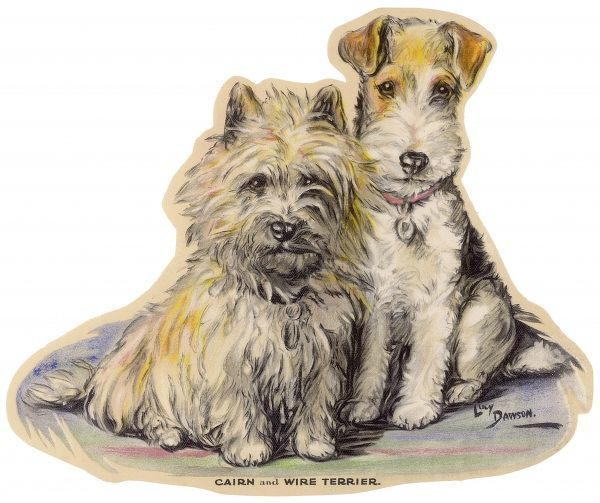 A Cairn and Wire Fox Terrier, seated