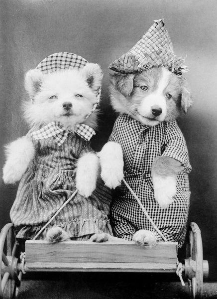 Two dogs on a go cart! Date: early 1930s