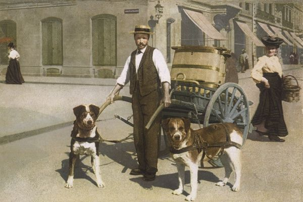 Two dogs stand ready to help the milkman pull his cart