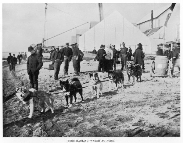 Dogs hauling water at Nome, Alaska, during the Gold Rush