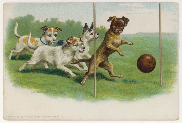 A group of four dogs play a lively game of football, one of them is about to score a goal