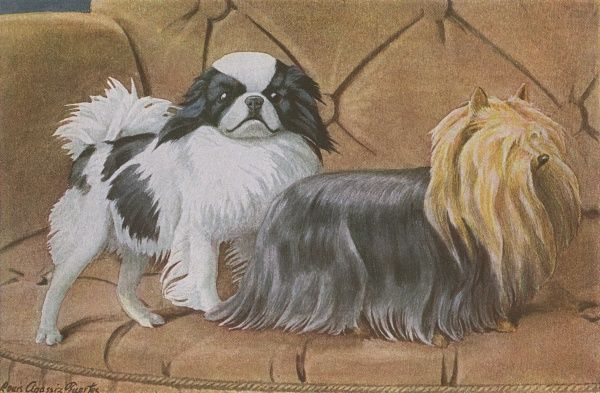 Two dogs on a sofa, a Japanese Spaniel and Yorkshire Terrier Date: 20th century