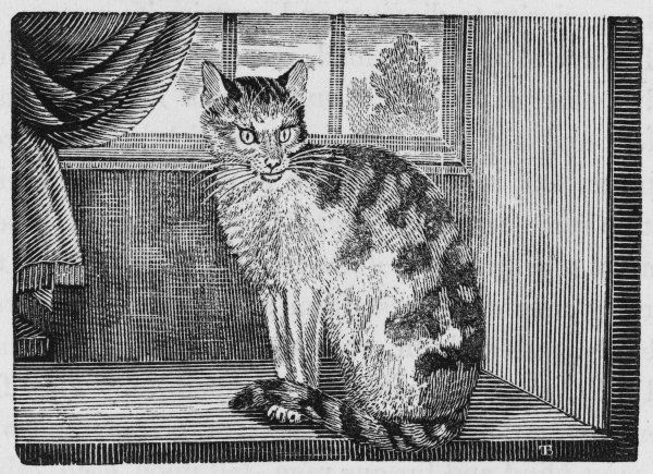 Felis felis : 'to describe an animal so well known, might seem a superfluous task&#39