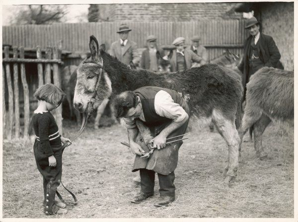 Shoeing (hooving) a donkey at a farm in Deal, where it has spent the winter. Come Easter the donkey will grace the beach at Margate. This little girl will have the first ride