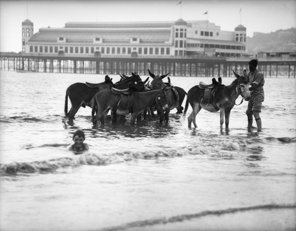 Business is bad at Weston- super-Mare, Somerset, England. The tide has come in on the poor huddled donkeys, much to the glee of one little boy swimming in the sea