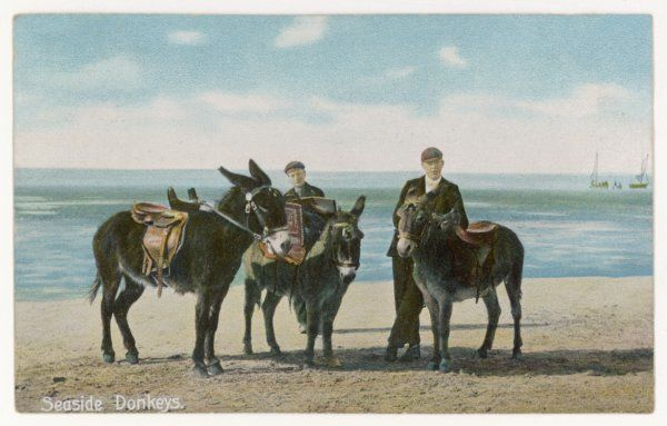 Donkeys and their donkey-boys wait for customers on the beach